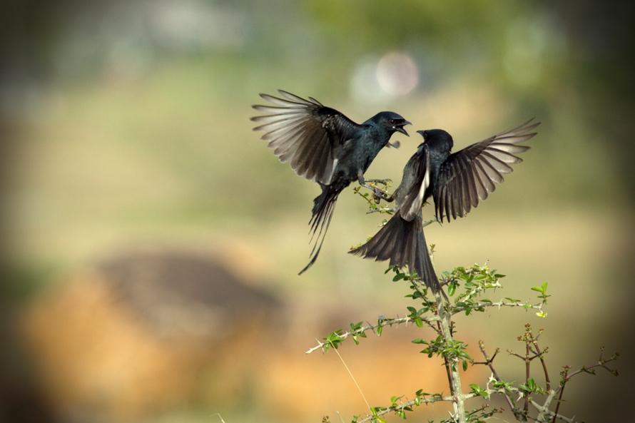 https://www.flickr.com/photos/vinothchandar/6874560581